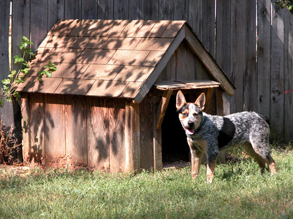 Dog in front of dog house