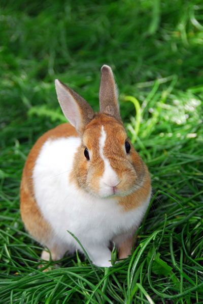 rabbit on grass